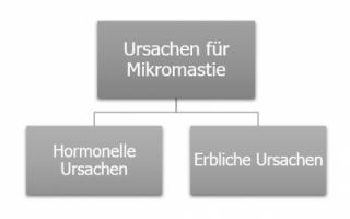 Mikromastie Mikromastie »